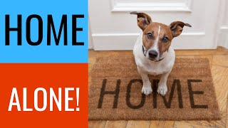 Leaving dogs home alone - Should you do it?