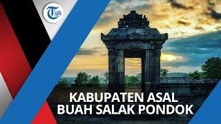 Kabupaten Sleman, Kabupaten di Daerah Istimewa Yogyakarta, Dikenal sebagai Asal Buah Salak Pondoh.