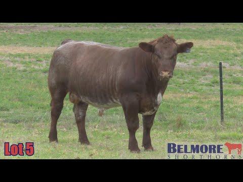 BELMORE QUANTUM Q281