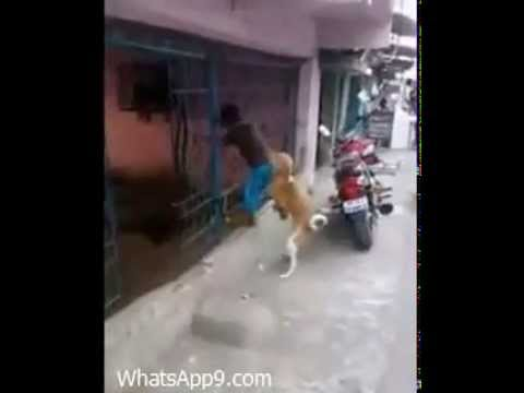 This Dog needs to get LAID! - Desi Funny Whatsapp - 2015