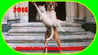 Новые приколы собак и кошек!!!