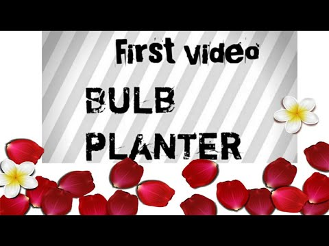 How to reuse old bulb/Bulb planter/Best out of waste