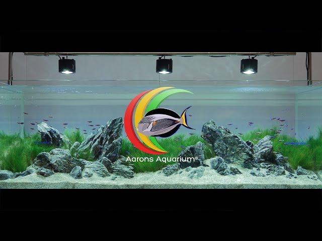 Beautiful Iwagumi Aquascape created by George Farmer For Evolution Aqua 4K