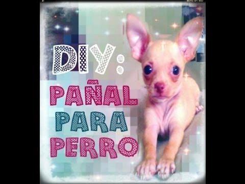 DIY: PAÑAL PARA PERRO MACHO/ADIÓS CASA SUCIA