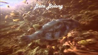 Dykning I Komodo Strædet