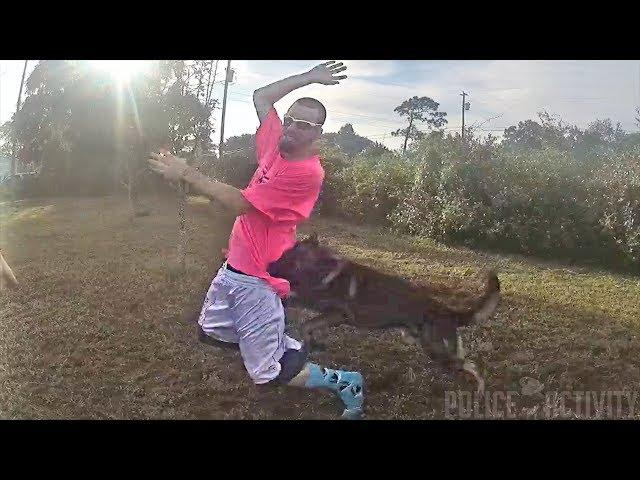 كلب يقبض على سارق بعد هروبه من الشرطة