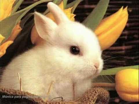 el conejo de mi novia