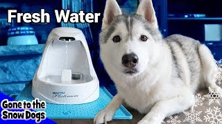 Huskies New Dog Water Fountain