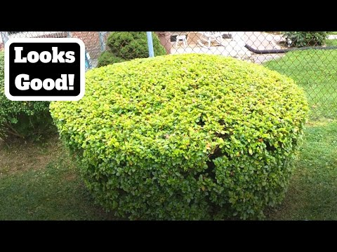 Trimming Bushes Looks Good!