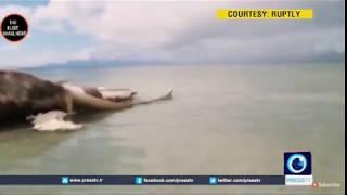 Mysterious dead sea creature found in Malaysia