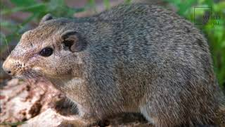 Interesting facts about dassie by weird square