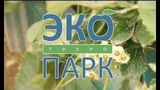 ЭкоТехноПарк SkyWay – экологическая составляющая