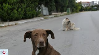 I spent a month around a pack of stray dogs - this is what I learned by The Orphan Pet