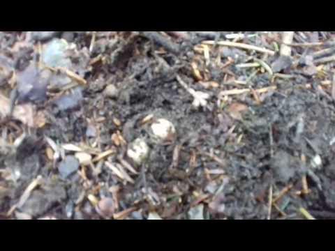 Come ridurre un fungo da unghie di gambe