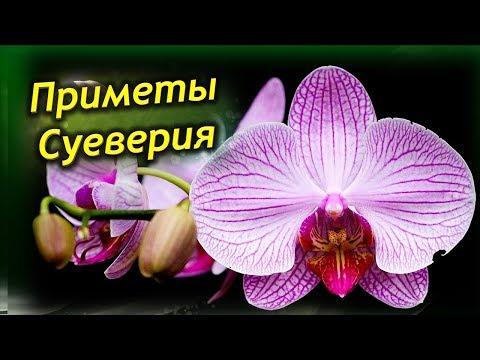 Орхидея в доме – приметы и суеверия. Стоит ли держать дома Орхидею?