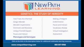 Genetics: The Study Of Heredity - Phenotypes And Genotypes