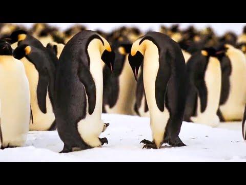 BBC Earth 50 Top Natural History Moments 40-31 #02