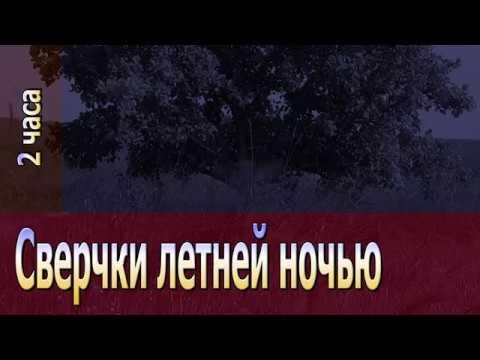 Сверчки летней ночью ✿ 2 часа ✿ Dеревенский RELAX