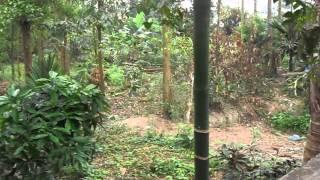 preview picture of video 'CHÙA ĐẠI PHẨM, XÃ ĐẠI YÊN, CHƯƠNG MỸ, HÀ NỘI'