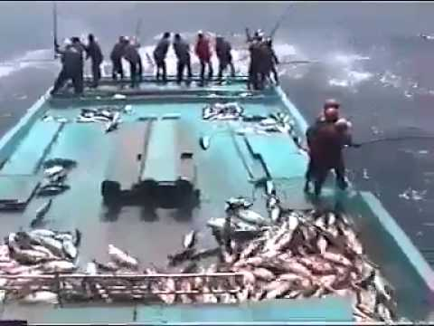 Câu cá MAX LEVEL