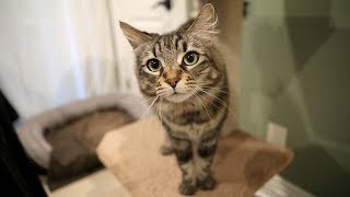 Owner rents studio apartment for cats