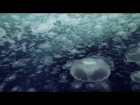 Open Ocean: 10 Hours of Relaxing Oceanscapes   BBC Earth
