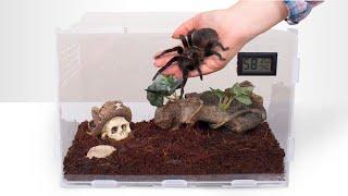 Собираем террариум для тарантула