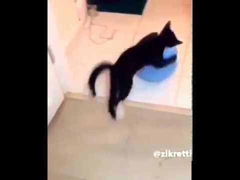 мяч прыгун и кот скакун