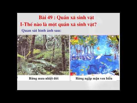 SINH HỌC 9 - BÀI 48 - 49: QUẦN THỂ NGƯỜI - QUẦN THỂ SINH VẬT
