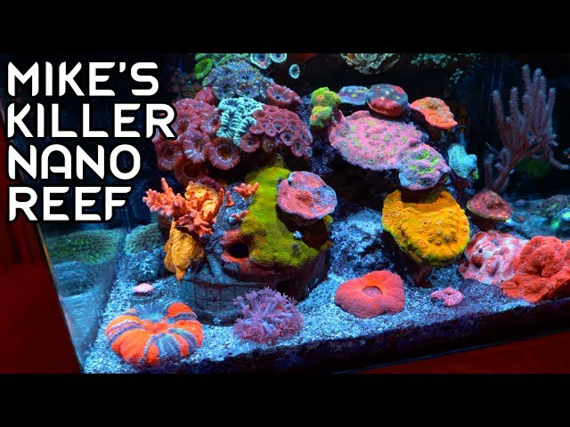 Mike's Killer Nano Reef Tank