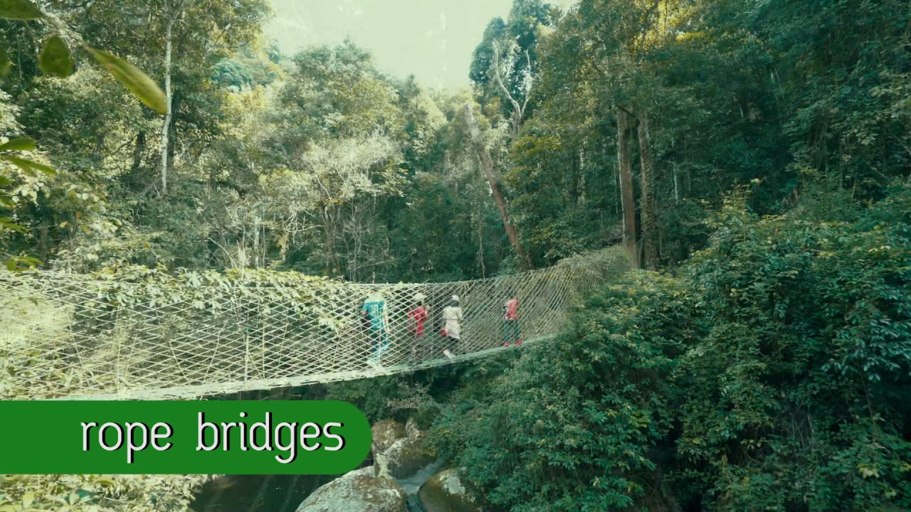 Trekking, Sky Bridges, Waterfall, Giant Trees