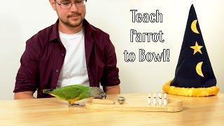 How to Teach Parrot to Bowl