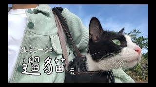 「遛貓」祕技大公開!跟我一起帶貓咪出門吧!(一些日常、回答問題、怎麼訓練貓咪穿遛貓衣、一個成功的案例分享)How i trained my cat