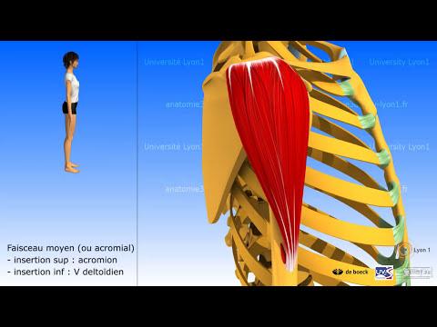Acheter miostimoulyator pour les muscles du fond pelvien