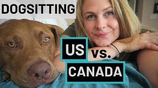DOG SITTING in Canada vs. the USA