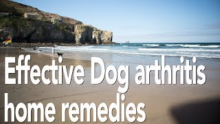 Dog arthritis treatment home remedy | All natural pain relief for dogs | Adrian