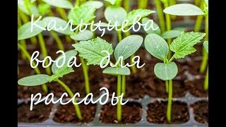 Кальциевая вода для полива рассады / Best natural fertilizer for any water plants