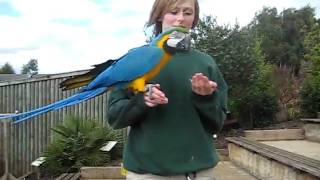 preview picture of video 'Exotic bird flying in Woburn Safari Park'