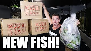 The SECRET fish for the MONSTER AQUARIUM!!