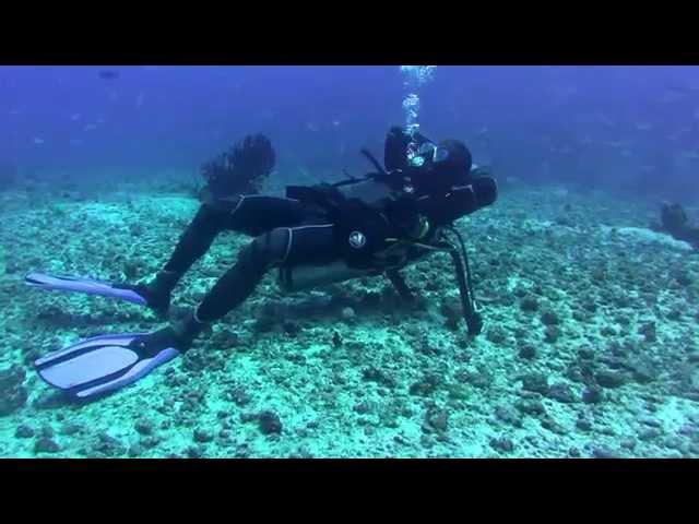Best Spots Diving - Sardine Reef, Kri island, Raja Ampat, West Papua, Indonesia