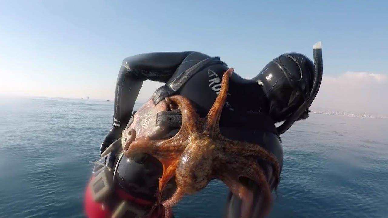 Наглый осьминог вцепился в спину дайвера