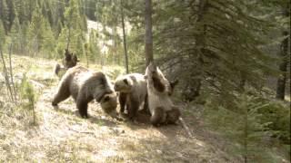 Медвежья танцевальная вечеринка