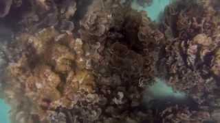 preview picture of video 'Ningaloo Reef Coral Bay Western Australia 02'