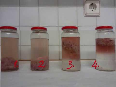 I parassiti in un organismo che causano