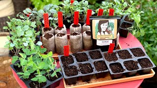 🍁 LIVE: When to Start Your Fall Garden (and What is It?) REPLAY