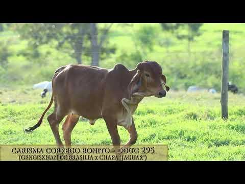 Carisma Córrego Bonito - DOUG 295