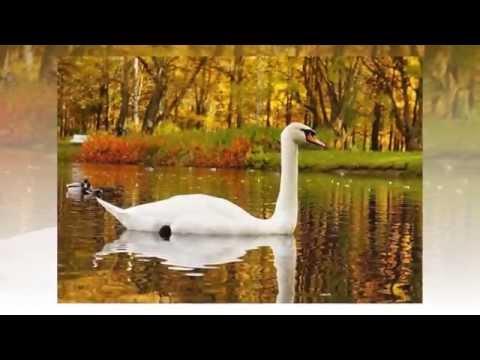 Осенняя прогулка. Красивая щедрая осень