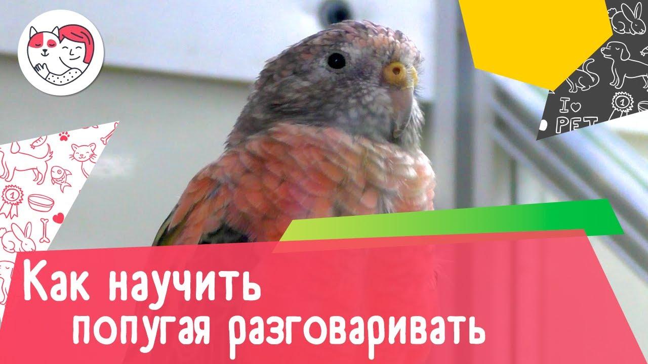 5 советов, как научить попугая разговаривать