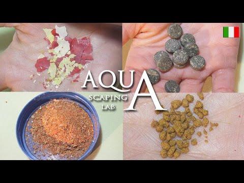 Aquascaping Lab - Cibo per pesci di acquario, tipologie consigli e somministrazione del mangime