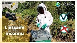 Comment gérer un essaim inconnu ?